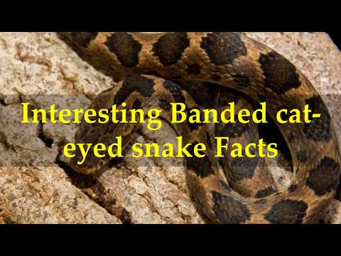 Interesting Banded Cat Eyed Snake Facts