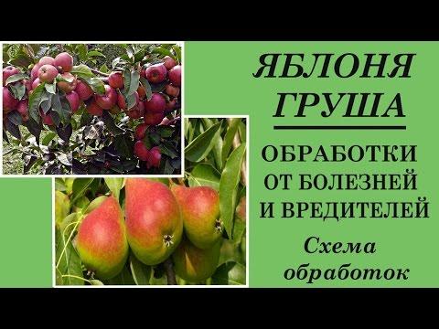 Обработка яблонь весной . Обработка сада весной от болезней вредителей