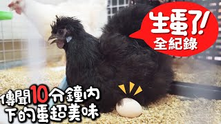 雞生蛋全紀錄!實測剛生下10分鐘與放一天的蛋,哪個更好吃!?雞養在家是什麼體驗?【許伯簡芝】小飛機