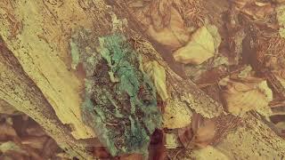 Video SWRAB - Lesné predmety