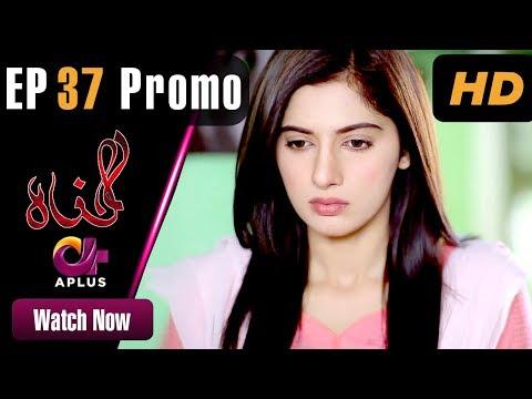 Pakistani Drama | Gunnah - Episode 37 Promo | Aplus Dramas | Sara Elahi, Shamoon Abbasi, Asad Malik