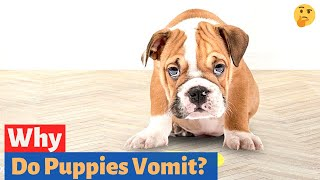 Why do Puppies Vomit? How to Stop Vomiting in puppies?