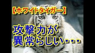 鹿児島市平川動物公園ホワイトタイガーが飼育員を殺害