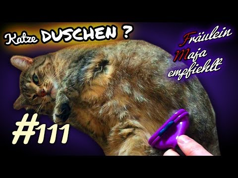 Fellpflege-Katze duschen? Die richtige Fellpflege-Fräulein Maja empfiehlt Teil 111
