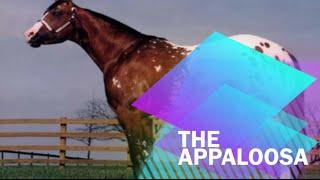 Fun Facts About Appaloosa!
