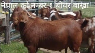 goat farming in nepal pdf - TH-Clip