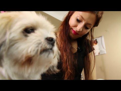Hunde haareschneiden - Lenis Tipps