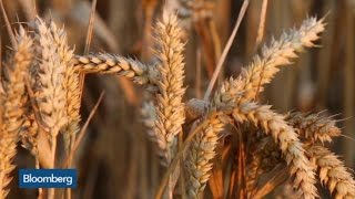 CORN - What's Driving Corn and Wheat Prices?