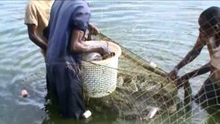 Big Catfish in Kenya