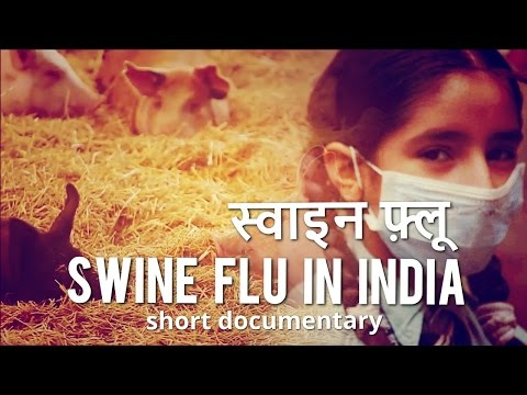 Video Swine Flu in India - Hindi Documentary - Cause, Symptoms and Remedy