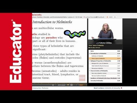 Hogyan lehet gyógyítani a helminthiasisot felnőtteknél