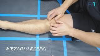 Mobilizacja więzadła rzepki – poziom 2 – MT008