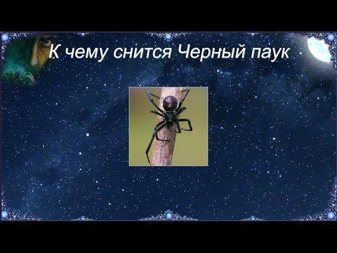К чему снится Черный паук (Сонник)