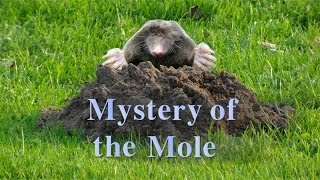 Mole Conversion Movie
