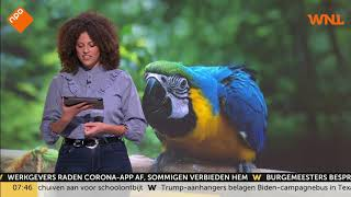 Haagse wijk zoekt mee naar vermiste papegaai Charlie