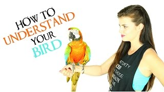 How To Understand Your PARROT | PARRONT TIP TUESDAY
