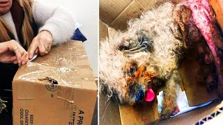 Woman Finds Strange Box On The Side Of The Road With A Heartbreaking Scene Inside