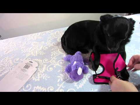 "Dog Harness Review: Greenbrier International (""Dollar Tree Deals"") Pet Harness"