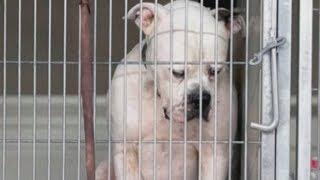 Пес грустил в клетке, опустив голову и всей душой надеясь, что хозяева вернутся за ним...