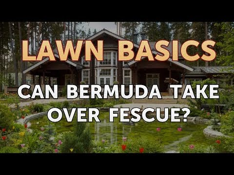 , title : 'Can Bermuda Take Over Fescue?