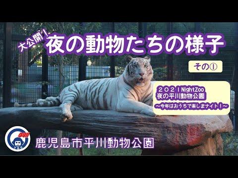 平川動物公園 大公開!夜の動物たちの様子