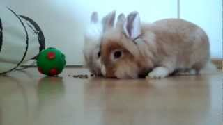 Two Rabbits Playing With A Ball