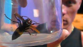 Дом с насекомыми. Гоа. Индия.