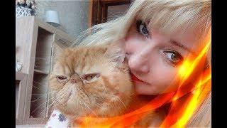 Приколы про кошек Позитив Создай себе хорошее настроение