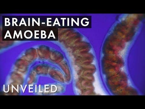 Gyógyszerek férgek és pinworms ellen