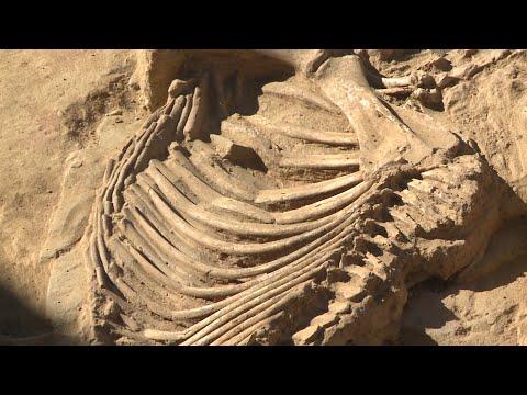 Knochenfunde in Badajoz |  Tartessos Zivilisation