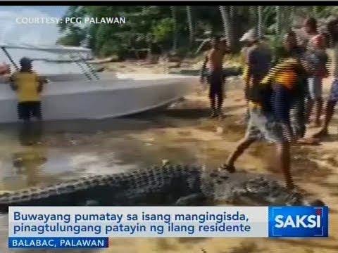 [GMA]  Saksi: Buwayang pumatay sa isang mangingisda, pinagtulungang patayin ng ilang residente