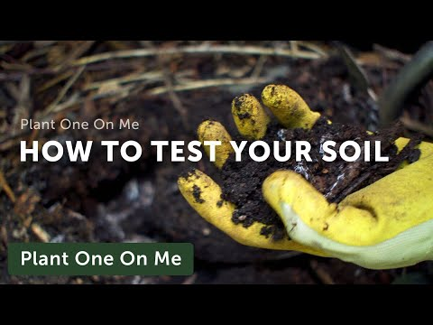 How to Test Your Garden Soil — Ep 126