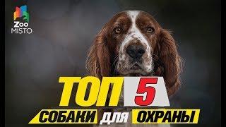 Топ 5 собаки для охраны\Top 5 dogs to guard