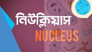 নিউক্লিয়াস (Nucleus)