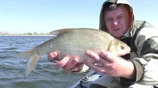 НАПАЛ НА СТАЮ ЛЕЩА. Рыбалка осенью 2018. Ловля леща на кольцо