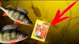 Использование кошачий корм для прикормки рыбы