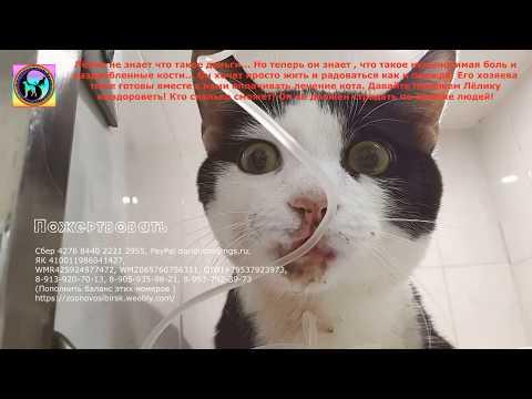 Кот выпал с восьмого этажа Кости раздроблены Ставьте сетку Антикошка Help the cat in the treatment