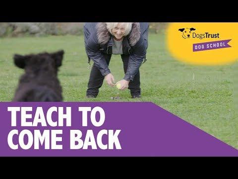 Dog Training Videos | Advice | Dogs Trust