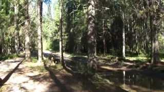 Велопрогулка по лесу. Вспоминаю Д-6 и мопед Верховину