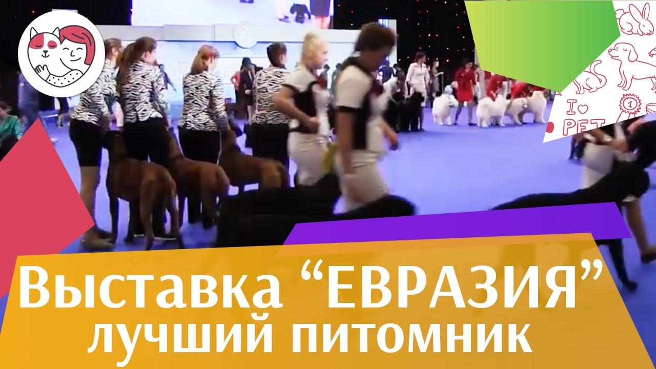Best in show Лучший питомник 19 03 17 на Евразии ilikepet