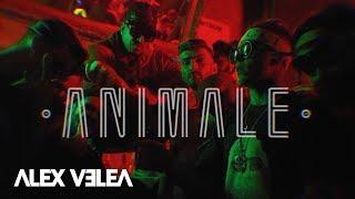 Alex Velea   Animale   Official Video