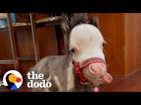 Meet Pea, a Dwarf Rescue Horse That Will Melt Your Heart