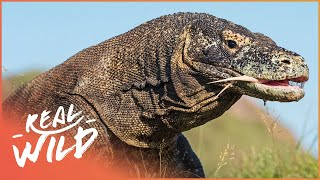 One Of The Most Lethal Animals On The Planet! |  Wild Thing Shorts