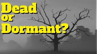 Is Your New Fruit Tree Dead or Just Dormant?