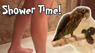 Truman Cape Parrot - Shower Time