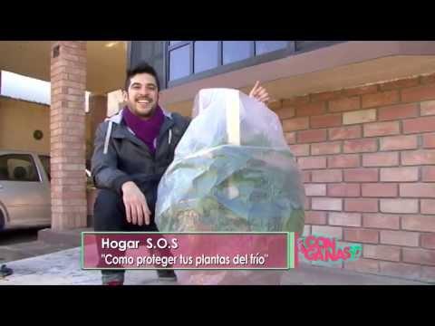Hogar S.O.S: