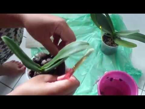La présence des entozoaires et leurs oeufs