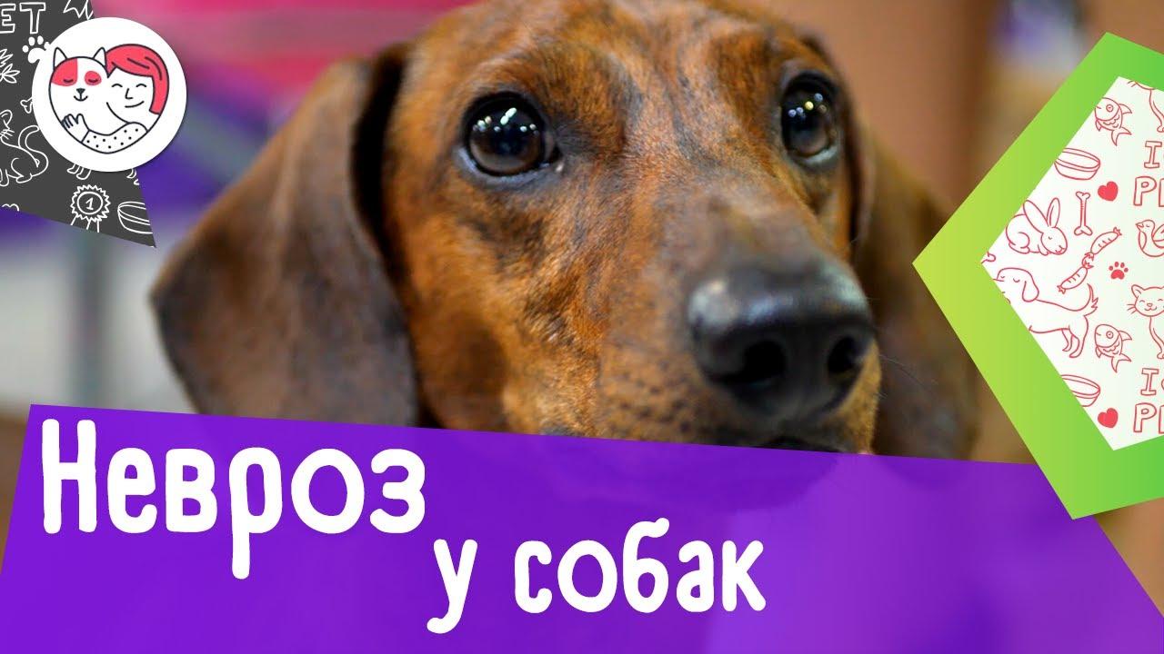 4 самые распространенные причины невроза у собак