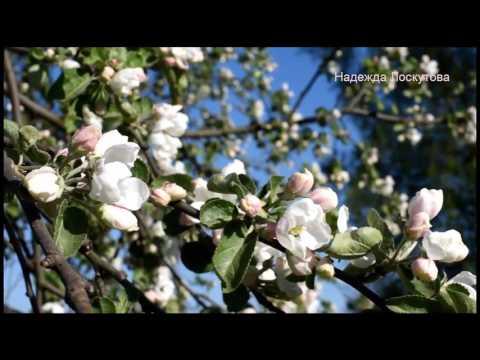 Лечение медом импотенции и простатита