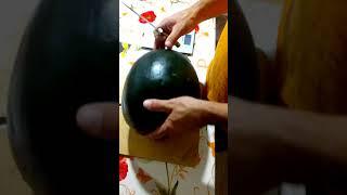 Видео обзор арбуза с желтой мякотью сорта Чудо ягода.